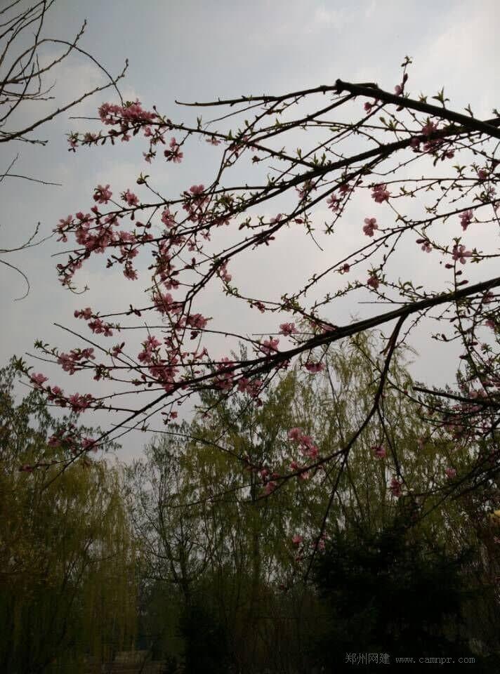 春天的美景 花开